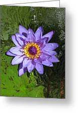 Water Lily 2013 Greeting Card