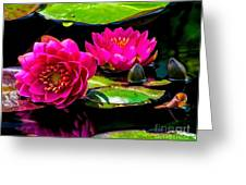 Water Lily 2014-12 Greeting Card