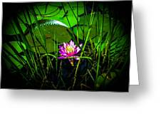 Water Lily 3 Greeting Card