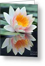 water lily 45 Water Lily with Reflection Greeting Card