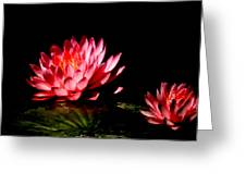 Water Lily 5 Greeting Card by Julie Palencia