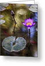 Water Lily 7 Greeting Card