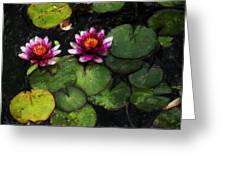 Water Lily Acanthius Greeting Card