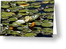 Water Lily And Bees Greeting Card