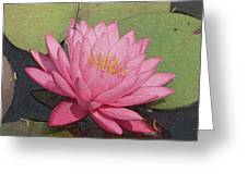 Water Lily And Guest Greeting Card
