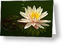 Water Lily And Pad Greeting Card