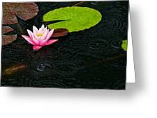 Water Lily And Raindrops Greeting Card