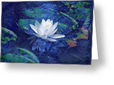 Water Lily Greeting Card by Ann Powell