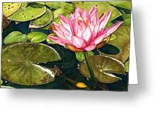 Water Lily At The Biltmore Gardens Greeting Card