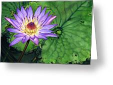 Water Lily At The Conservatory Of Flowers Greeting Card