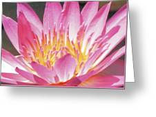 Pink Water Lily Beauty Greeting Card