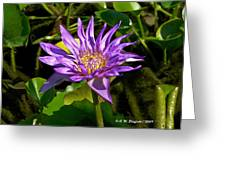 Water Lily Bloom Greeting Card