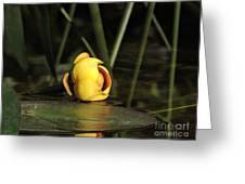 Water Lily Bud Greeting Card