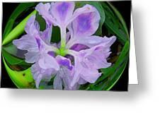 Water Lily Circle Greeting Card