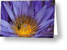water lily from Madagascar Greeting Card