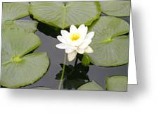 Water Lily I I Greeting Card