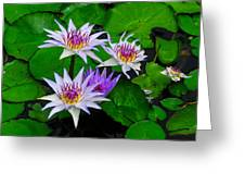 Water Lily IIi Greeting Card