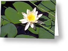 Water Lily I I I Greeting Card