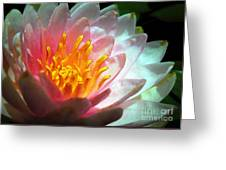 Water Lily In The Sun Greeting Card