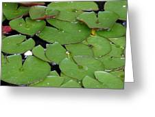 Water Lily Leaves Greeting Card