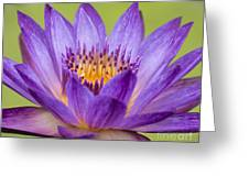 Water Lily Lindsey Woods Macro Greeting Card