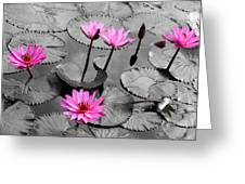 Water Lily Lotus Flower And Leaves Greeting Card