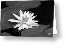 Water Lily On Pad Greeting Card