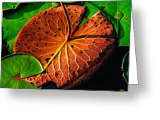 Water Lily Pad Greeting Card