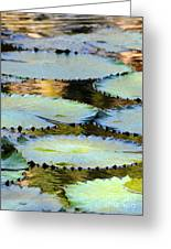 Water Lily Pads In The Morning Light Greeting Card