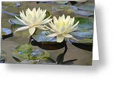 Water Lily Pair Greeting Card