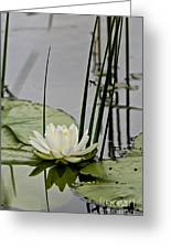 Water Lily Pictures 48 Greeting Card