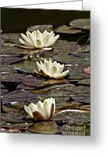 Water Lily Pictures 64 Greeting Card