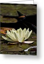 Water Lily Pictures 67 Greeting Card