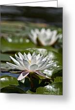 Water Lily Pictures 70 Greeting Card