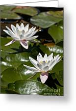Water Lily Pictures 75 Greeting Card