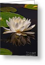 Water Lily Pictures 81 Greeting Card