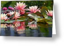 Water Lily Profusion Greeting Card