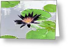 Water Lily - Purple Power - Photopower 1376 Greeting Card