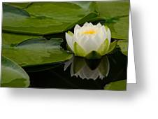 Water Lily Reflection II Greeting Card