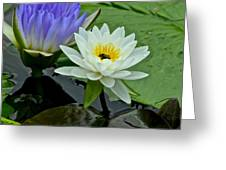 Water Lily Serenity Greeting Card