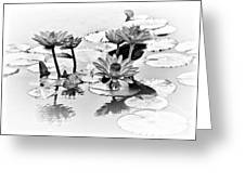 Water Lily Study - Bw Greeting Card