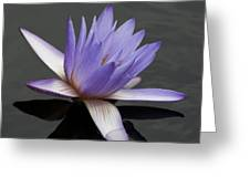Water Lily Teri Dunn Greeting Card