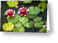 Water Lily Water Color Greeting Card