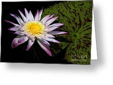Water Lily With Lots Of Petals Greeting Card