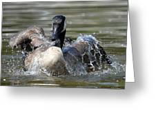 Water Logged - Canadian Goose Greeting Card