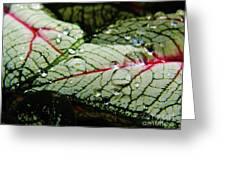 Water On The Leaves Greeting Card