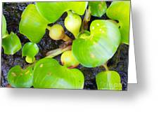Water Plants 1 Greeting Card