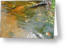 Water Plants 2 Greeting Card