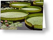 Water Platter Charm Greeting Card
