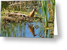 Water Rail Reflection Greeting Card
